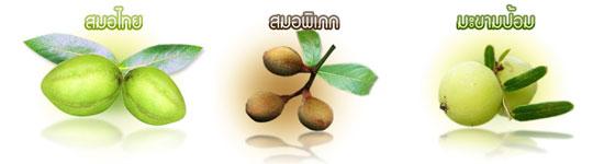 ตรีผลา สมอไทย ยาอายุวัฒนะ ชลอความแก่