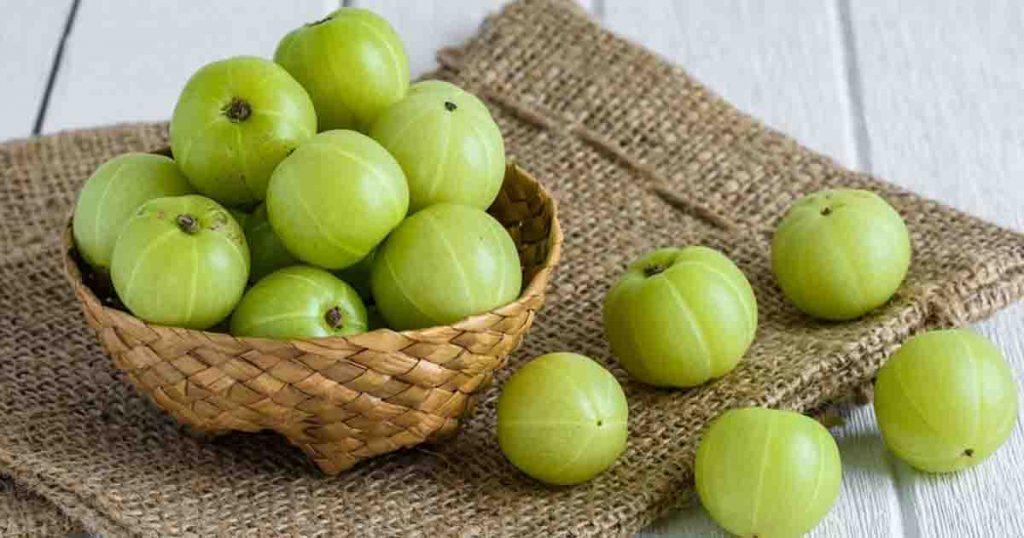 สมุนไพรแก้กรดไหลย้อน มะขามป้อม (Indian gooseberry)